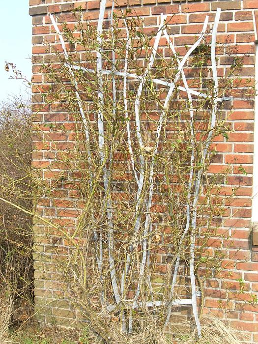 Sichtschutz rankhilfe stahl m bel und heimat design for Rankpflanzen wohnung