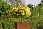 Pflanzgefäß aus Cortenstahl